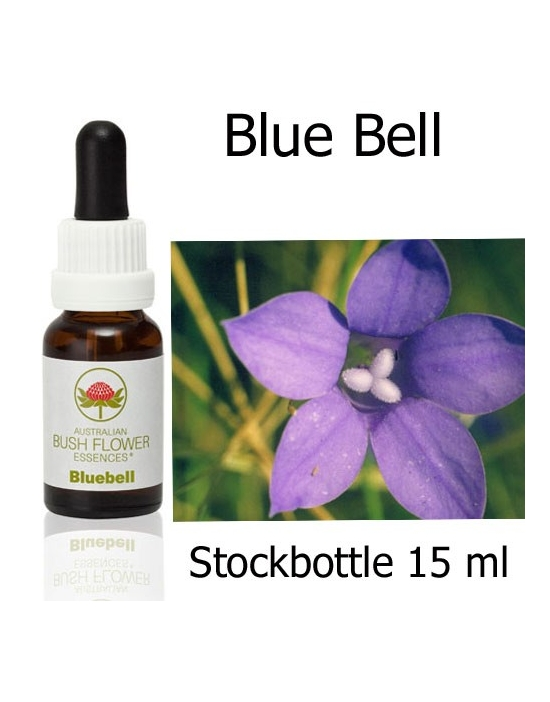 Buschblüten Bluebell Stockbottle