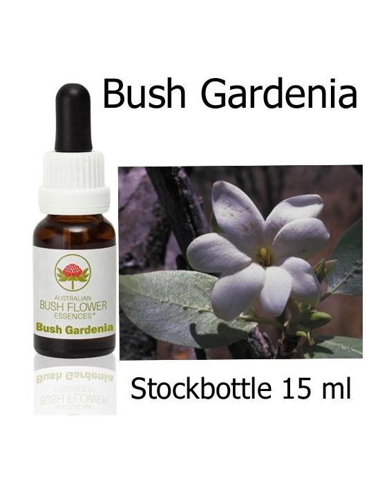 Australische Buschblüten Bush Gardenia Stockbottles