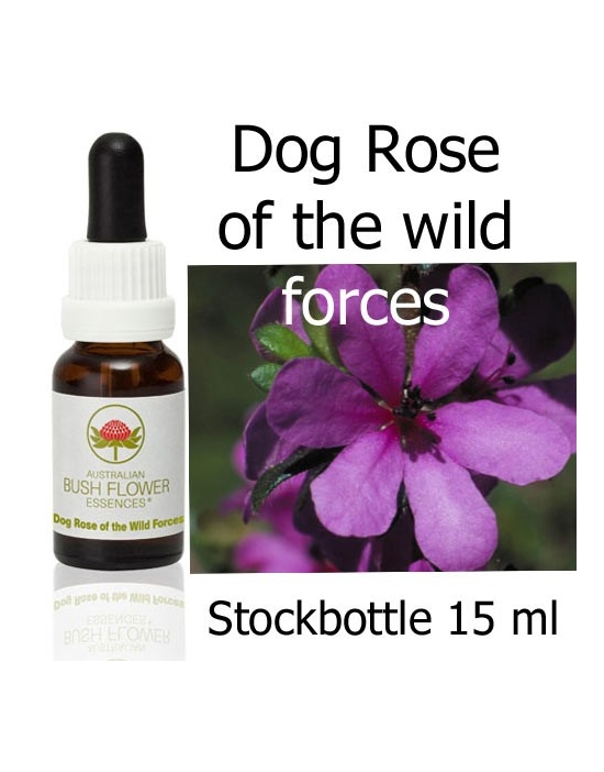Dogrose of the wild forces Australische Buschblüten Stockbottles 15 ml
