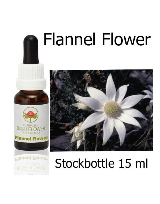 Australische Buschblüten Flannel Flower Stockbottles