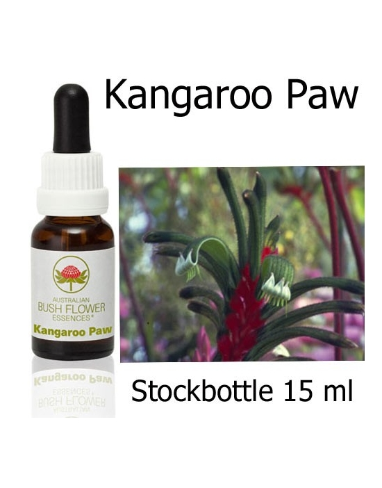Australische Buschblüten Stockbottle Kangaroo Paw