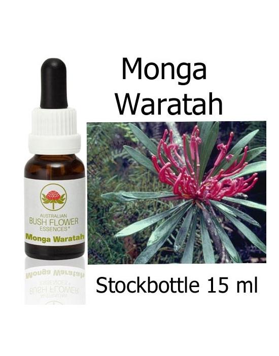 Australische Buschblüten Stockbottles Monga Waratah