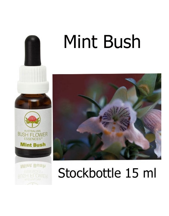 Australian Bush Flower Essences MINT BUSH Stockbottles 15 ml