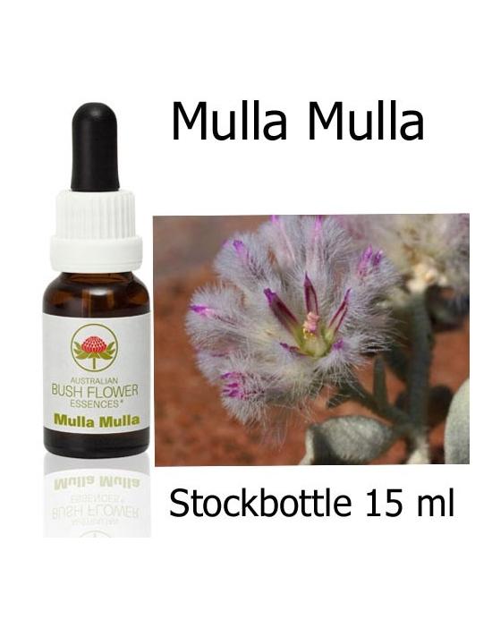 Australische Buschblüten Stockbottles Mulla Mulla