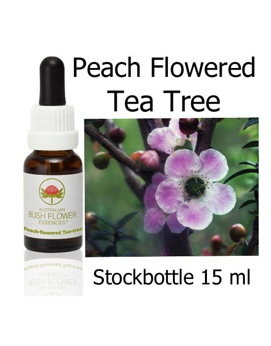 Australische Buschblüten Stockbottles Peach Flowered Tea Tree
