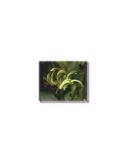 Fiore Black Kangaroo Paw Living Essences
