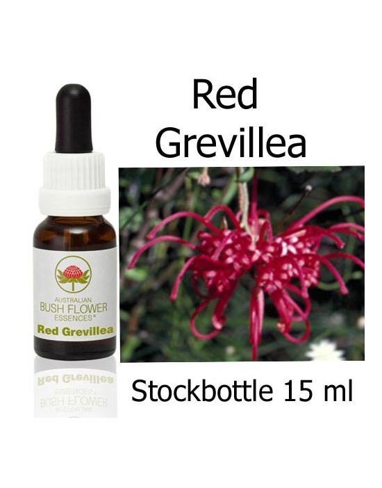Australische Buschblüten Red Grevillea