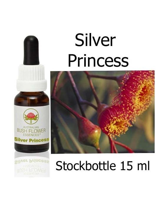 Australische Buschblüten Silver Princess