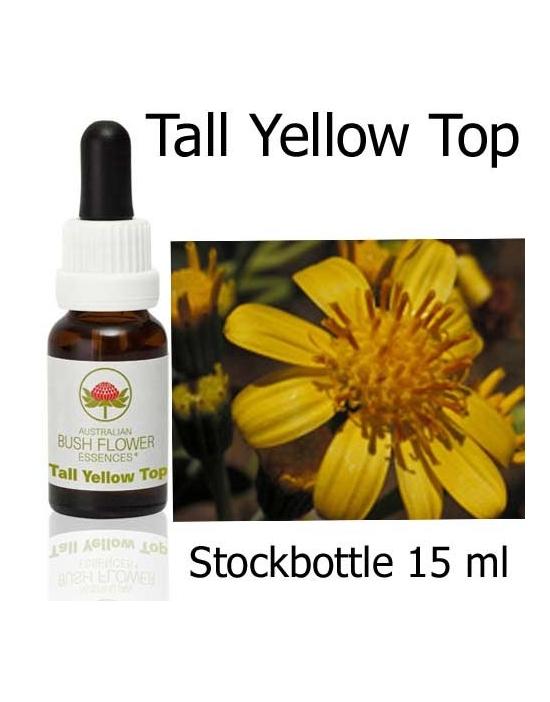 Australische Buschblüten Tall Yellow Top