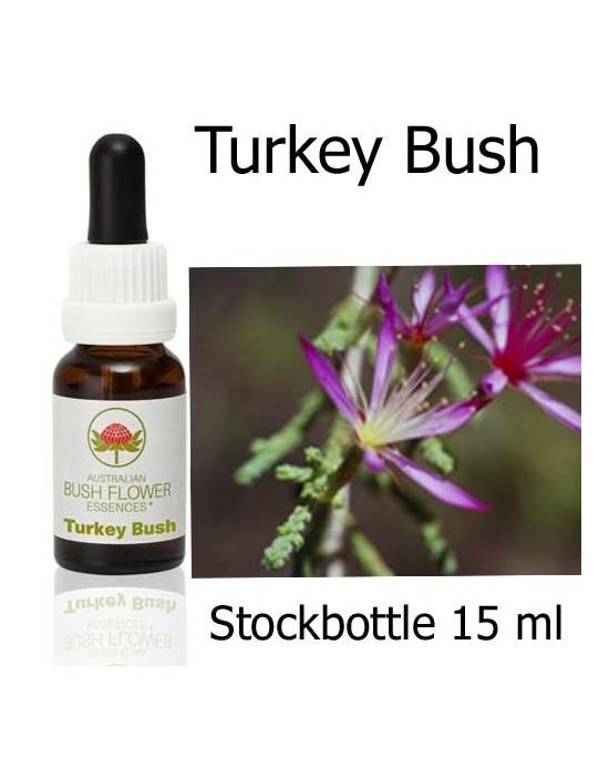 Australische Buschblüten Turkey Bush
