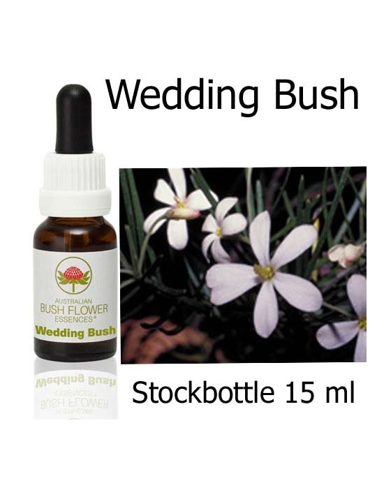 Australische Buschblüten Wedding Bush