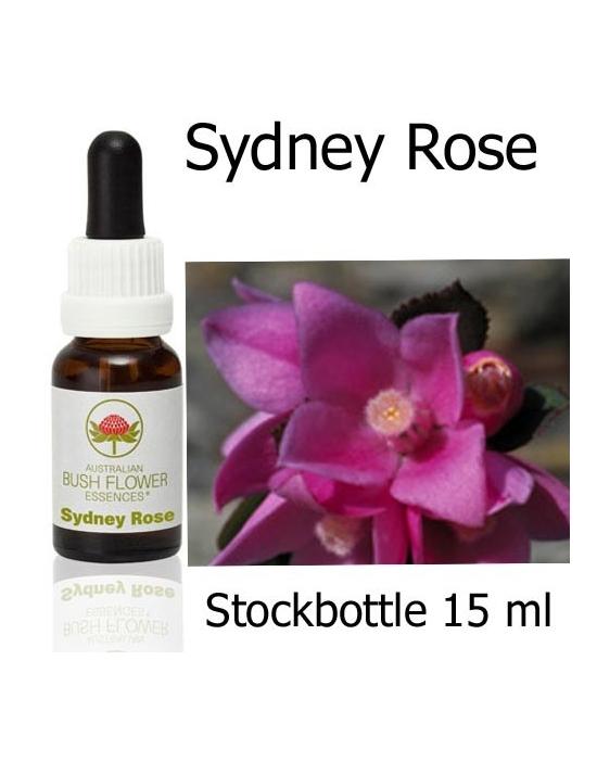 Australische Buschblüten Sydney Rose