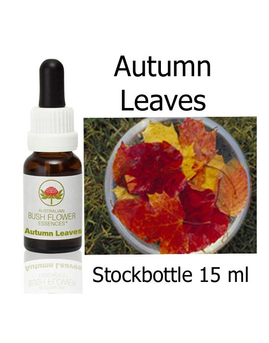 Autumn Leaves Buschblüten Stockbottles