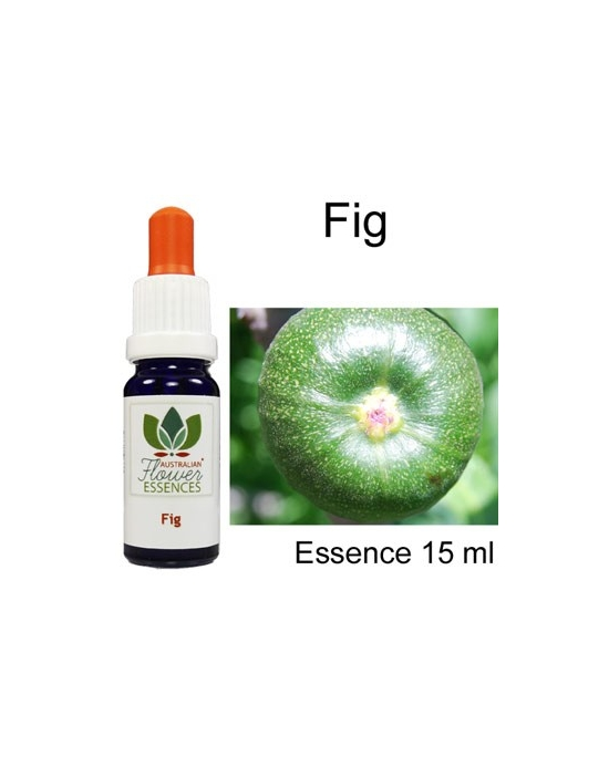 FIG Buschblüten Australian Flower Essences 15 ml Love Remedies