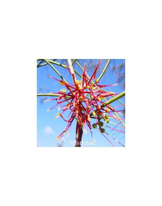 Mistletoe Australische Buschblüten