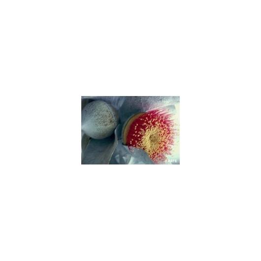 Macrocarpa Buschblüten Australian Bush Flower Essences