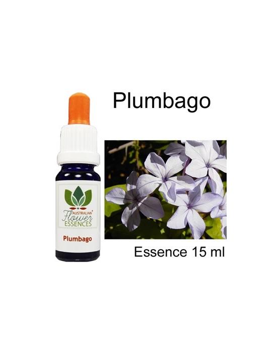 Plumbago Australian Flower Essences Buschblüten