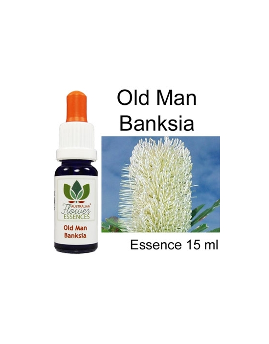 Old Man Banksia...