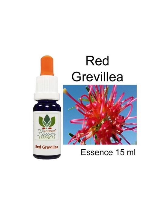 RED GREVILLEA Australian...