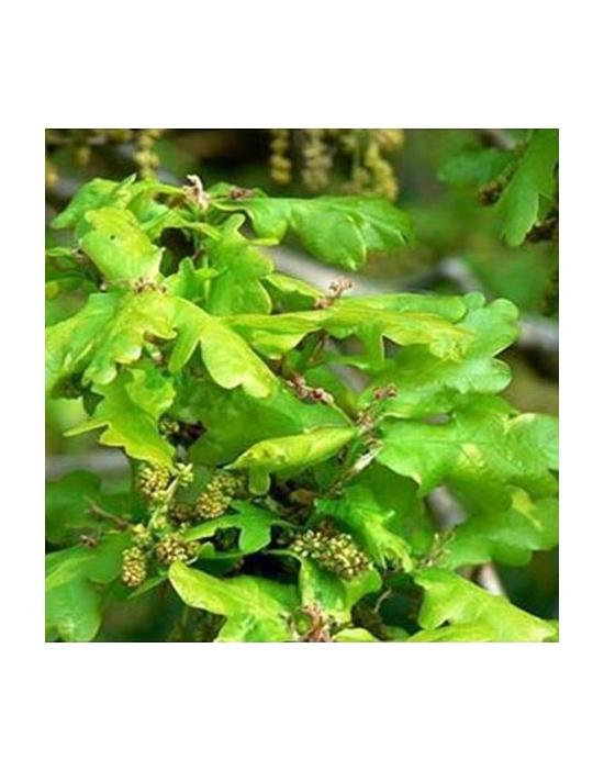 Oak Bio Bachblüten Tropfen Nr. 22 Eiche
