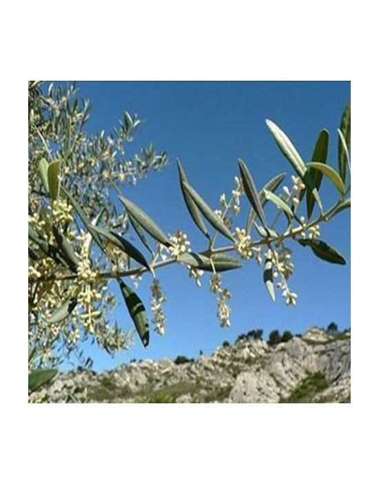 Floriterapia Olive Nr. 23 Fiori di Bach BIO