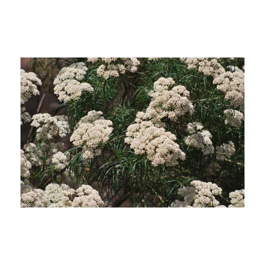 Worrai Australische Buschblüten Australian Flower Essences