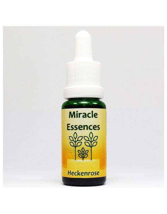 Heckenrose Miracle Essences Blütenessenzen