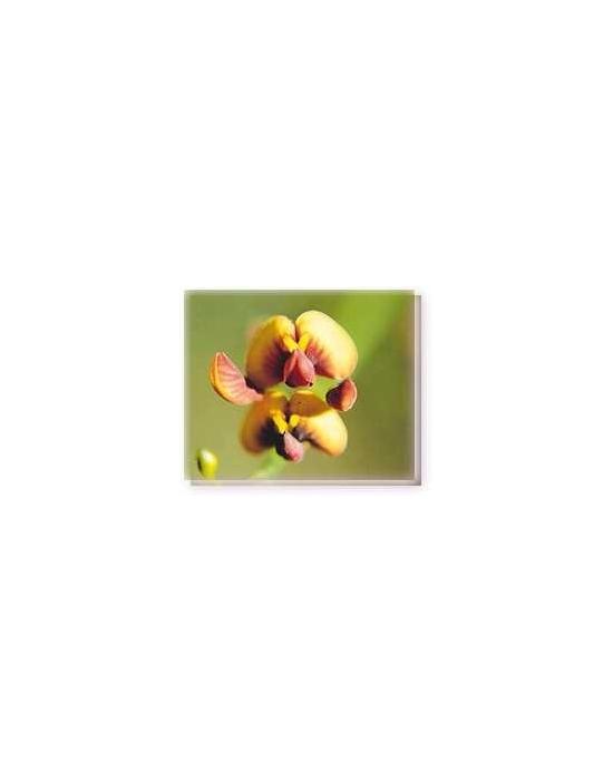 Bachblüten Orange Spiked Pea Living Essences