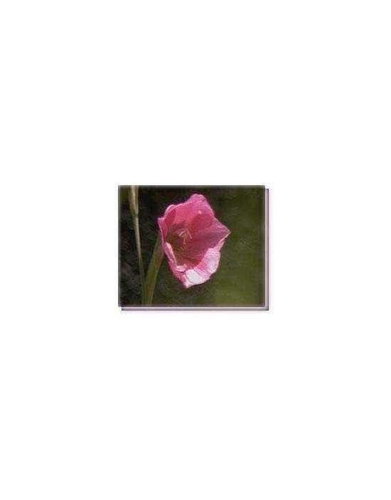 Bachblüten Pink Trompet Flower Living Essences