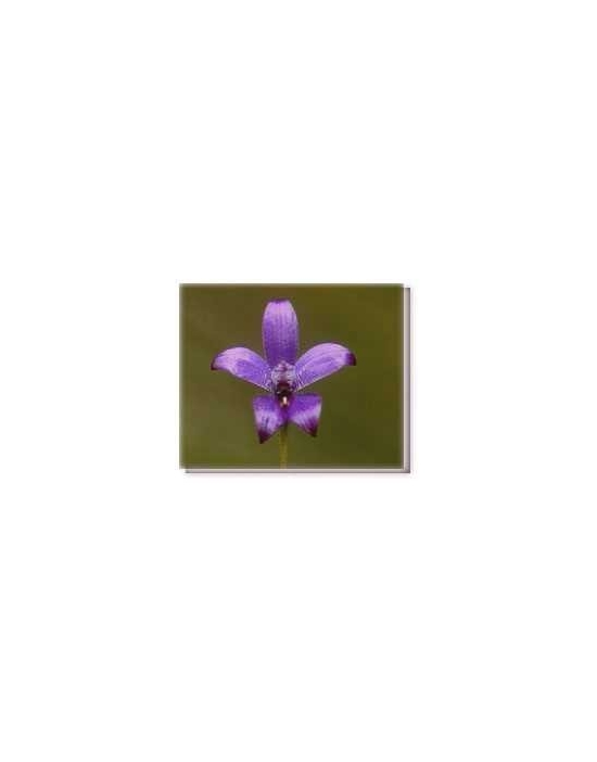 Fiore Purple Enamel Orchid Living Essences