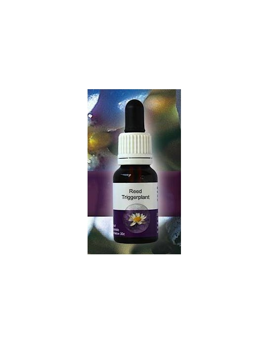 RED TRIGGERPLANT Living Essences Stockbottle 15 ml Essenze floreali australiane