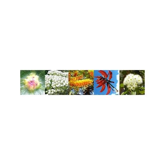 Flowers Focus Blend Australian Flower Essences