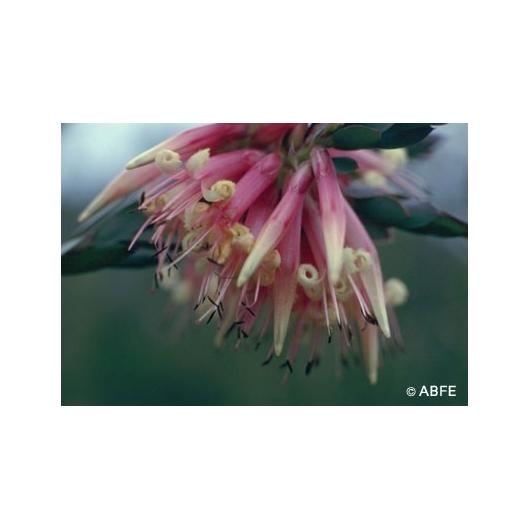 Five Corners Flower