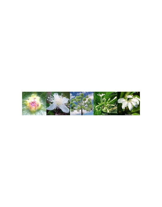 Spirituality Flowers Australian Flower Essences Blend