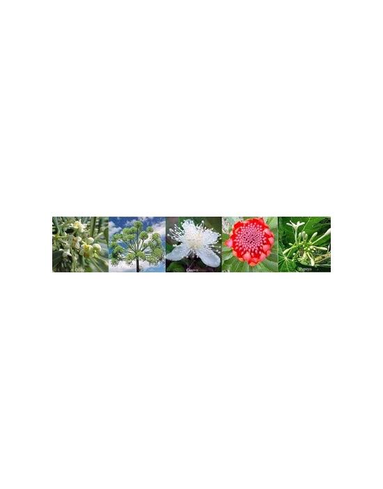 Regeneration Healing Australische Buschblüten Vitalsprays