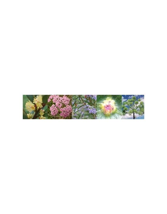 Schutz Protection Australische Buschblüten Vitalsprays