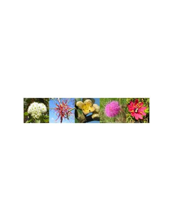 Blüten Communication Kommunikation Australische Buschblüten