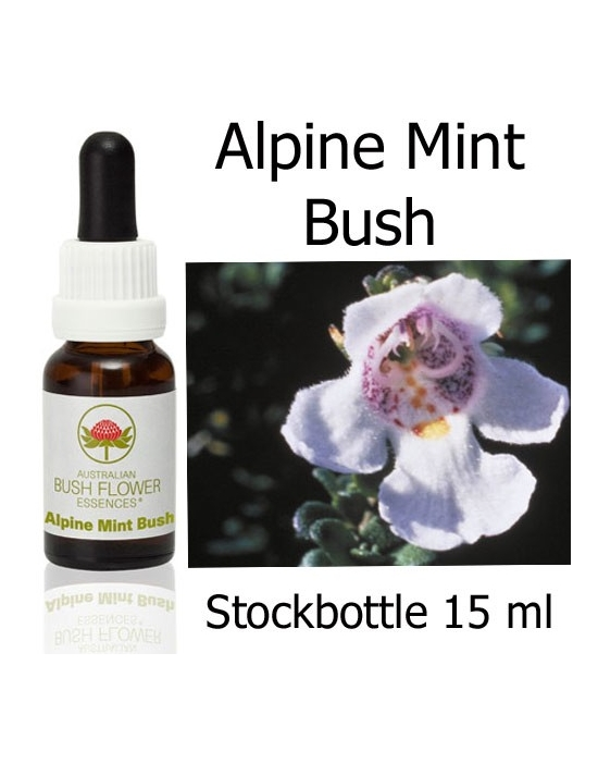 Alpine Mint Bush Australische Buschblüten Stockbottles 15 ml