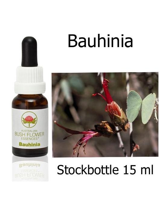 Australian Bush Flower Essences BAUHINIA Stockbottles 15 ml