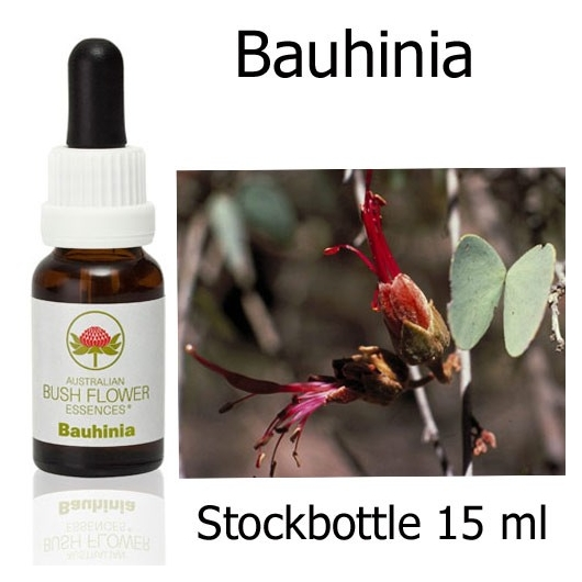 Buschblüten Bauhinia Stockbottles