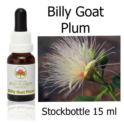 Buschblüten Billy Goat Plum Stockbottles