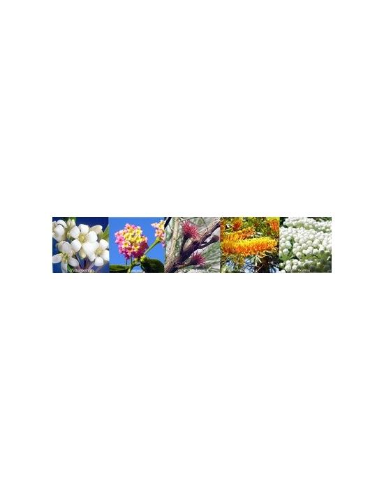 Blüten für Change Veränderung Australische Buschblüten Aurasprays