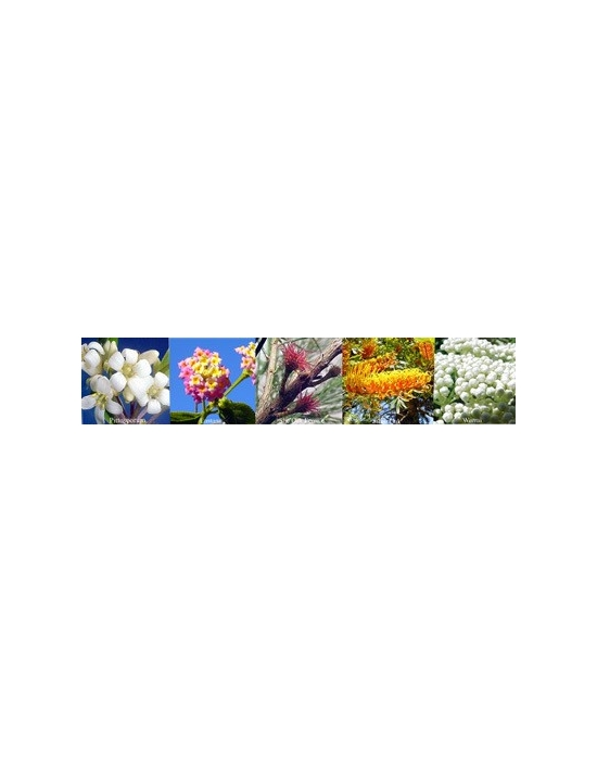 Flowers for Change Aura sprays Australian Flower Essences