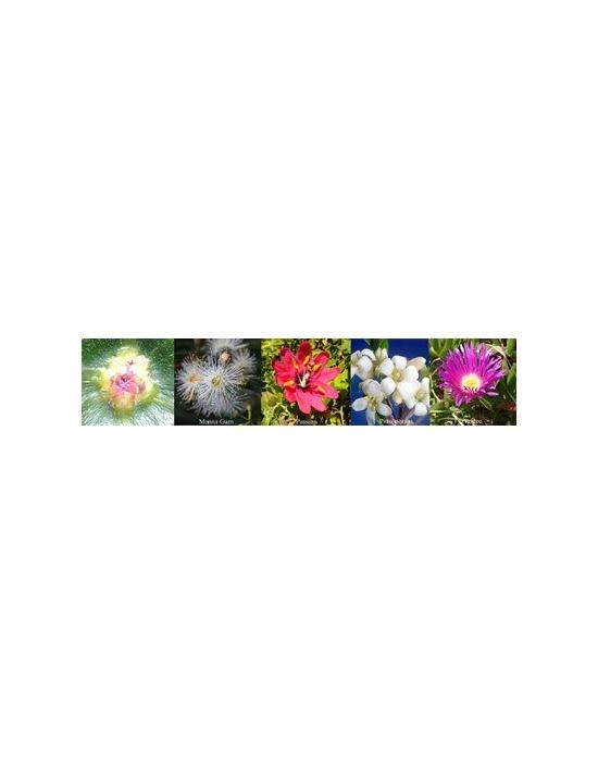 Blüten für Relax Entspannung Australische Buschblüten Auraspray Australian Flower Essences
