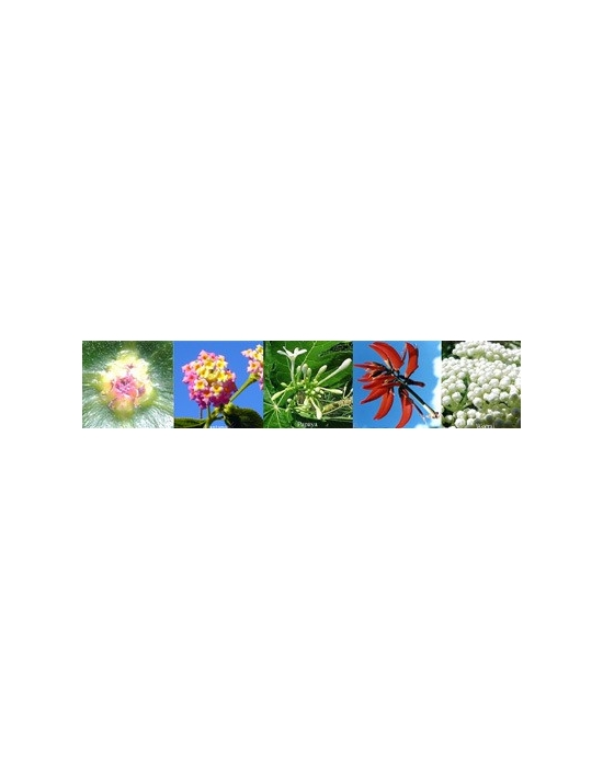 flowers for Confidence Australian Flower Essences Aura spray