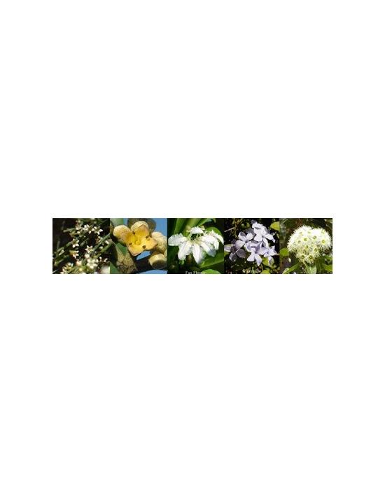 Blüten für Happiness Freude Australische Blütenessenzen Aurasprays