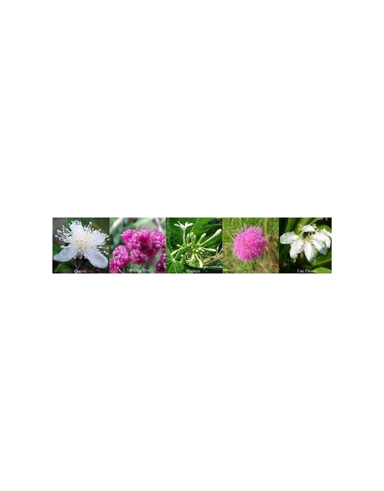 Flowers for Inner Peace Aura spray Australian Flower Essences