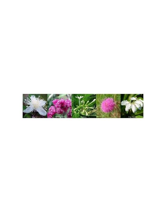 Blüten für Inner Peace Frieden Australische Buschblüten Aurasprays