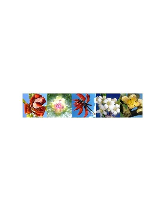 Blüten für Sexuality Sexualität Australische Buschblüten Aurasprays
