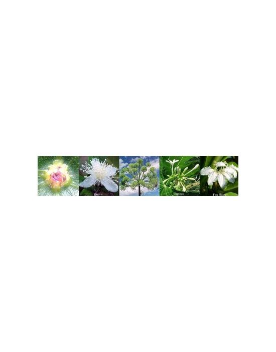 Blüten für Spirituality Spiritualität Australische Buschblüten Aurasprays